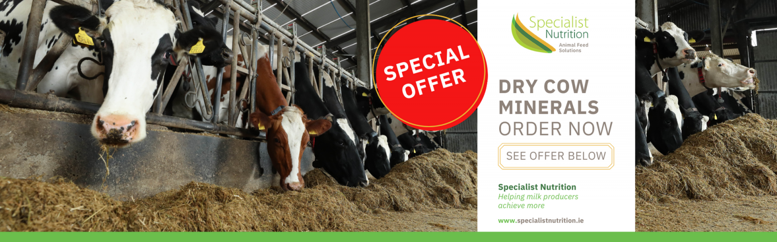Dry Cow Management And Precalver Minerals